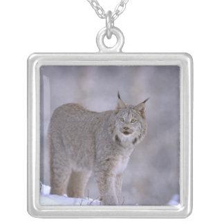 North America, USA, Alaska, Haines. Lynx (Felis Square Pendant Necklace