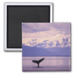 North America, USA, Alaska, Inside Passage. 2 Inch Square Magnet