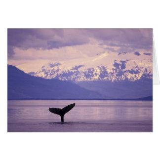 North America, USA, Alaska, Inside Passage. Card