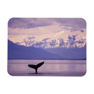 North America, USA, Alaska, Inside Passage. Magnet