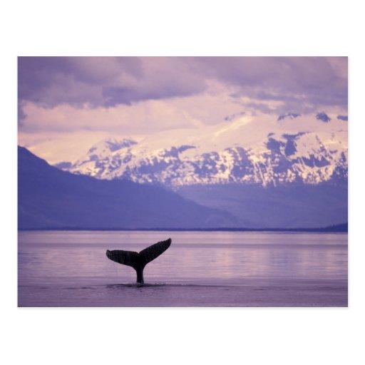 North America, USA, Alaska, Inside Passage. Postcard