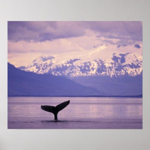 North America, USA, Alaska, Inside Passage. Print