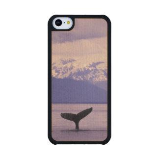 North America, USA, Alaska, Inside Passage. Carved® Maple iPhone 5C Slim Case