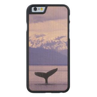North America, USA, Alaska, Inside Passage. Carved® Maple iPhone 6 Slim Case