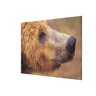North America, USA, Alaska, Katmai NP. Brown Canvas Prints