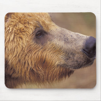 North America, USA, Alaska, Katmai NP. Brown Mouse Pad