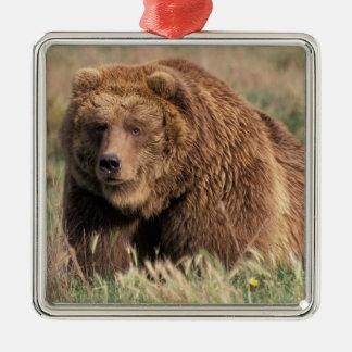 North America, USA, Alaska, Kodiak Island, Square Metal Christmas Ornament
