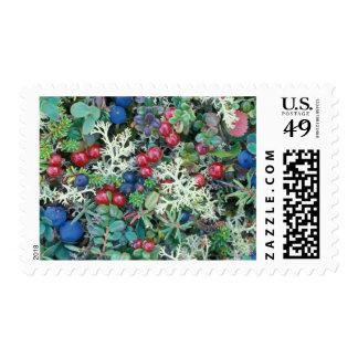 North America, USA, Alaska, Landscape, berries Stamp