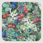 North America, USA, Alaska, Landscape, berries Sticker