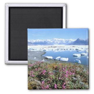 North America, USA, Alaska, Prince William Magnets