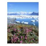 North America, USA, Alaska, Prince William Post Card