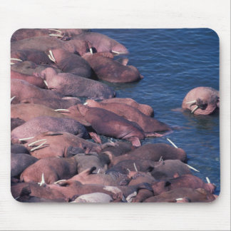 North America, USA, Alaska, Round Island, Mouse Pad