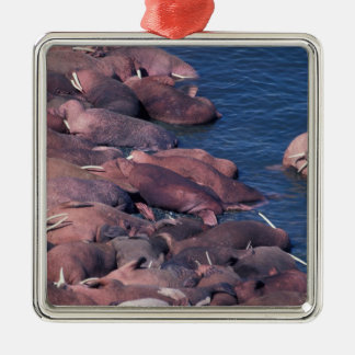 North America, USA, Alaska, Round Island, Square Metal Christmas Ornament
