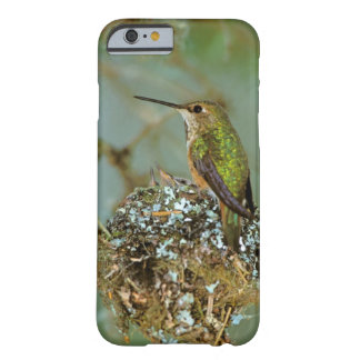 North America, USA, Alaska. Rufous Humming bird Barely There iPhone 6 Case