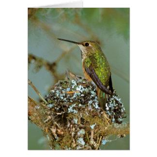 North America, USA, Alaska. Rufous Humming bird Card