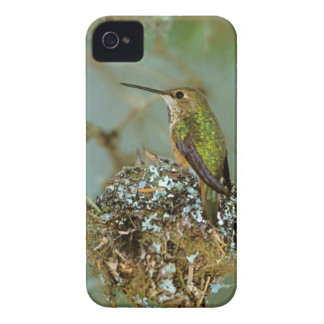 North America, USA, Alaska. Rufous Humming bird iPhone 4 Case-Mate Case