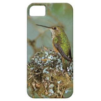 North America, USA, Alaska. Rufous Humming bird iPhone SE/5/5s Case