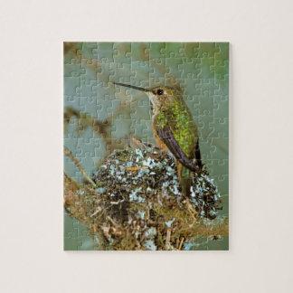 North America, USA, Alaska. Rufous Humming bird Jigsaw Puzzle