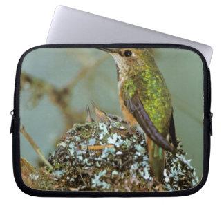 North America, USA, Alaska. Rufous Humming bird Laptop Sleeve
