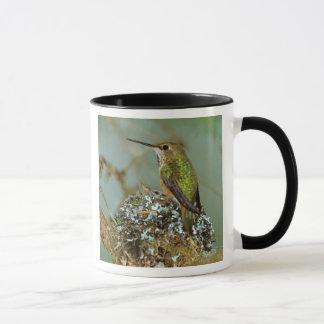 North America, USA, Alaska. Rufous Humming bird Mug
