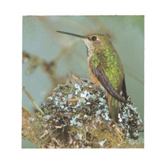 North America, USA, Alaska. Rufous Humming bird Notepad