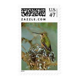 North America, USA, Alaska. Rufous Humming bird Postage Stamp
