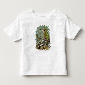 North America, USA, Alaska. Rufous Humming bird Toddler T-shirt