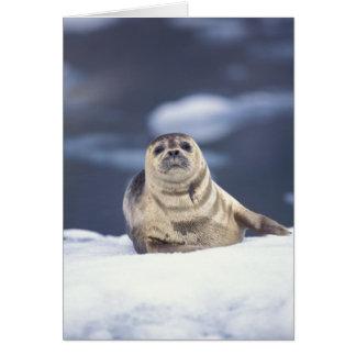 North America, USA, Alaska, S.E., Le Conte Card