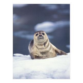 North America, USA, Alaska, S.E., Le Conte Postcard