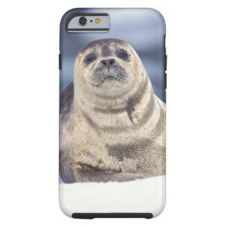 North America, USA, Alaska, S.E., Le Conte Tough iPhone 6 Case