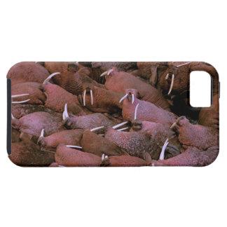 North America, USA, Alaska, Yukon Delta National iPhone 5 Covers