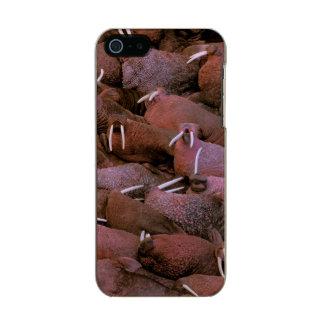 North America, USA, Alaska, Yukon Delta National Incipio Feather® Shine iPhone 5 Case