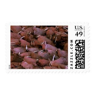 North America, USA, Alaska, Yukon Delta National Stamps