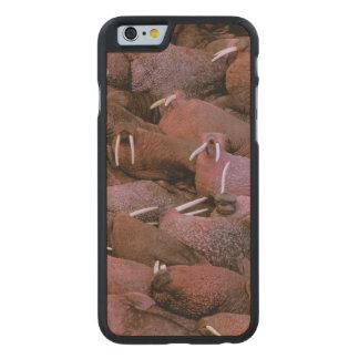 North America, USA, Alaska, Yukon Delta National Carved® Maple iPhone 6 Slim Case