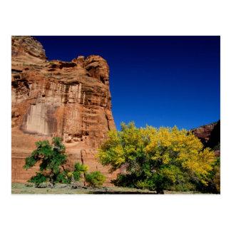 North America, USA, Arizona, Navajo Indian 3 Postcard