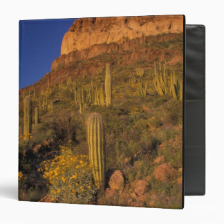 North America, USA, Arizona, Organ Pipe Cactus 2 Binder