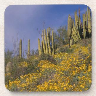 North America, USA, Arizona, Organ Pipe Cactus Drink Coaster
