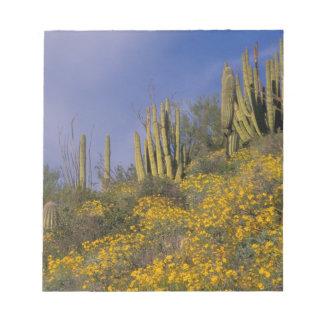 North America, USA, Arizona, Organ Pipe Cactus Note Pads