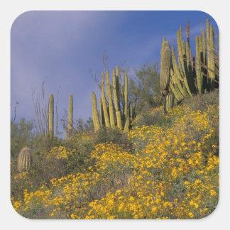 North America, USA, Arizona, Organ Pipe Cactus Square Sticker