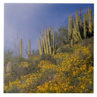North America, USA, Arizona, Organ Pipe Cactus Tile