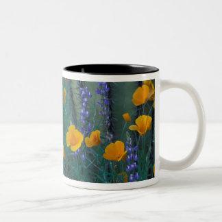 North America, USA, Arizona, Organ Pipe Cactus Two-Tone Coffee Mug