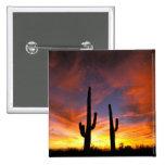 North America, USA, Arizona, Sonoran Desert. Button