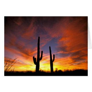 North America, USA, Arizona, Sonoran Desert. Card