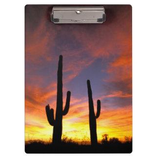 North America, USA, Arizona, Sonoran Desert. Clipboard