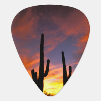 North America, USA, Arizona, Sonoran Desert. Guitar Pick
