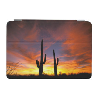 North America USA Arizona Sonoran Desert iPad Mini Cover