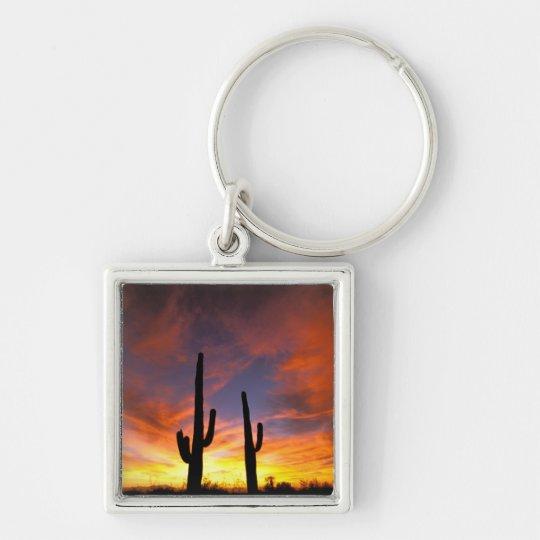 North America, USA, Arizona, Sonoran Desert. Keychain