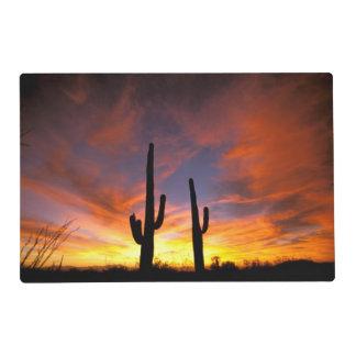 North America, USA, Arizona, Sonoran Desert. Placemat