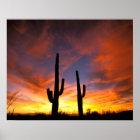 North America, USA, Arizona, Sonoran Desert. Poster