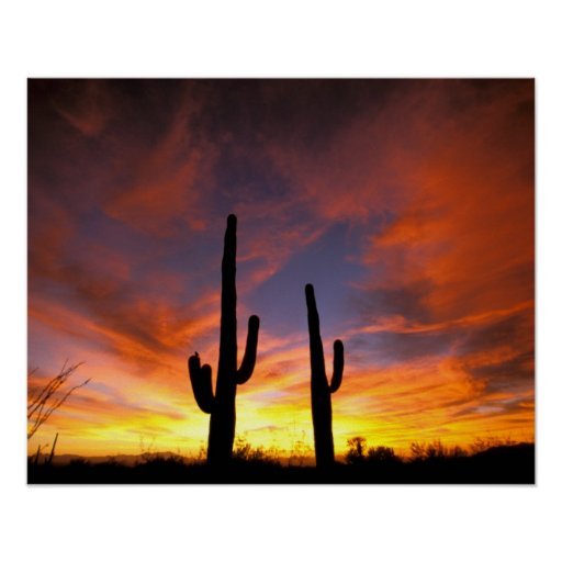 North America, USA, Arizona, Sonoran Desert. Posters